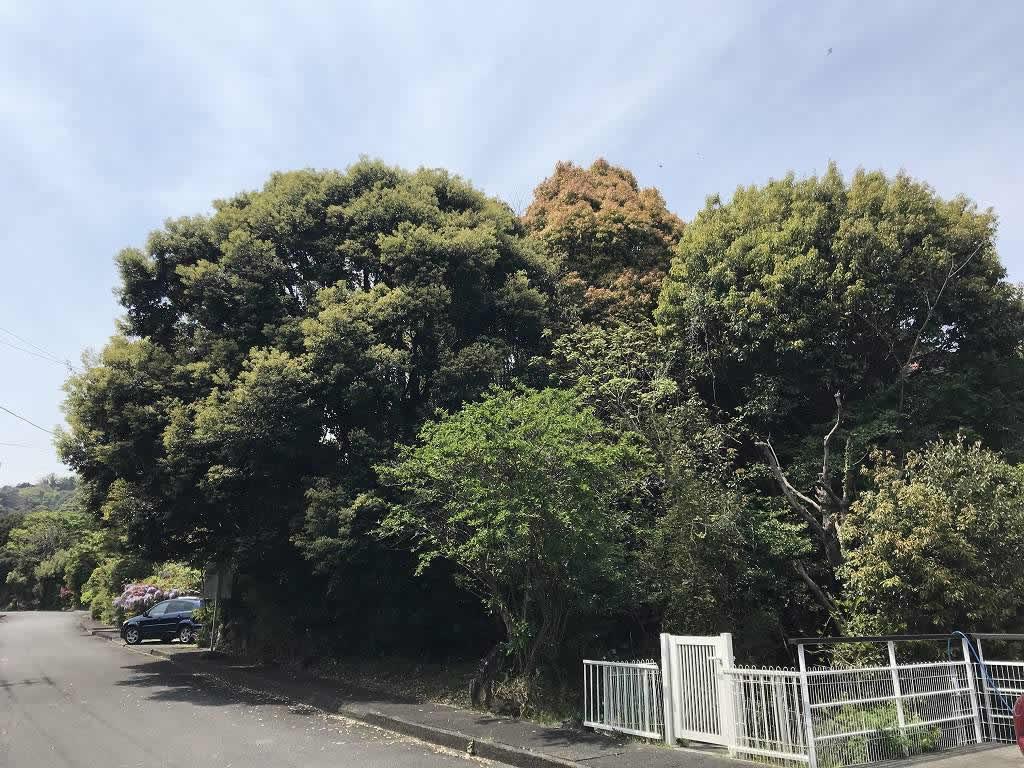 【伊豆高原】山林